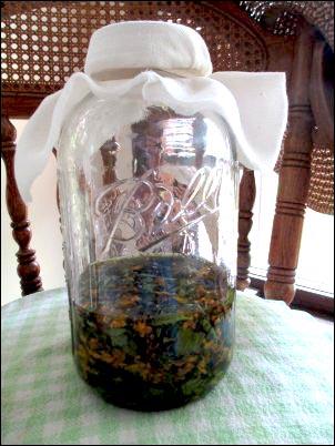 steeping herbs for homemade salve, herbal-salve-making, herbal salve recipes