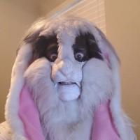 Amorpheous-E-Bunny's Avatar