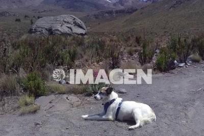 Muere el perro guardián del volcán Citlaltepétl