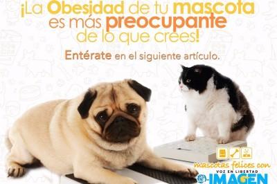 El sobrepeso y la obesidad en las mascotas