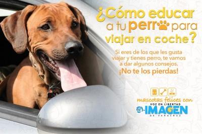 ¿Cómo educar a un perro para viajar en coche?