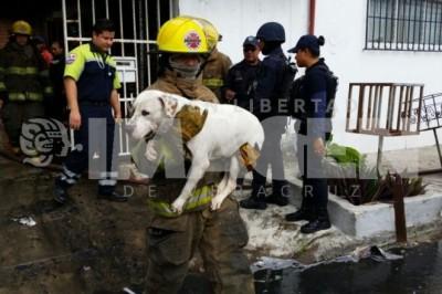 Muere perico y rescatan a 5 perros en incendio