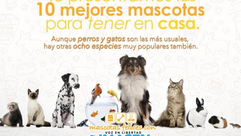 Las 10 mejores mascotas para tener en casa imagen de veracruz - Perros para tener en casa ...