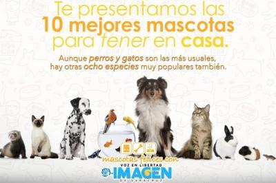 Las 10 mejores mascotas para tener en casa