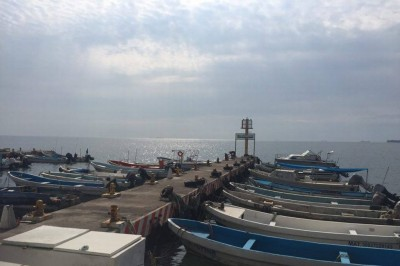 Pescadores tienen empleo temporal bajo asesoría de la APIVer