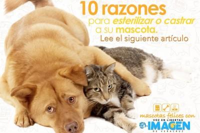 10 razones para esterilizar o castrar a su mascota