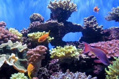 La mitad de los arrecifes de coral del mundo han sido destruidos