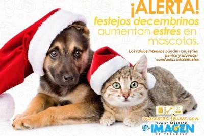 ¡Alerta! festejos decembrinos aumentan estrés en mascotas
