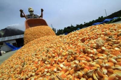 México es el mayor importador de maíz a Estados Unidos