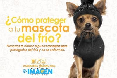 ¿Cómo proteger a tu mascota del frío?