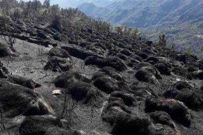Devasta incendio decenas de hectáreas en Pico de Orizaba