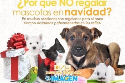 ¿Por qué no regalar mascotas en Navidad?