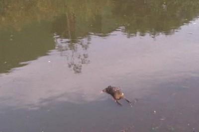 Encuentran cuerpo flotando en arroyo de Tres Valles