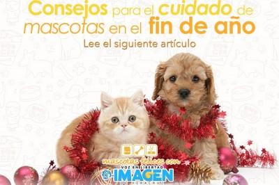 Consejos para el cuidado de mascotas en el fin de año