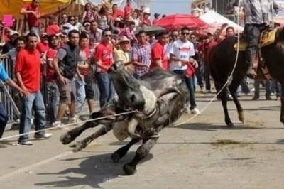 Grupos sociales exigen cancelar el embalse de toros durante fiestas de Tlacotalpan