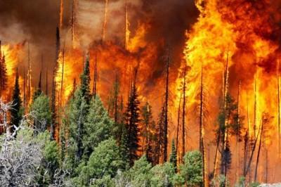 Incendio en La Perla consume 10 hectáreas de bosque