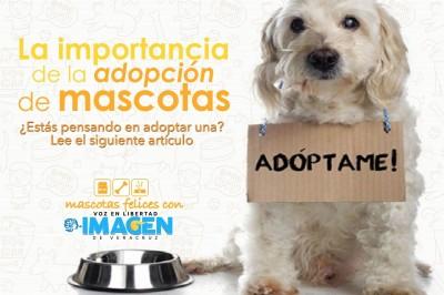 La importancia de la adopción de mascotas