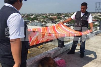 Centro de Salud Animal rescata a perro callejero en el Puente Allende