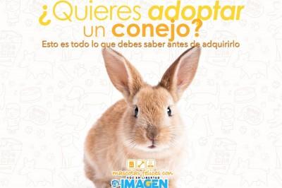 Todo lo que necesitas saber antes de adoptar un conejo