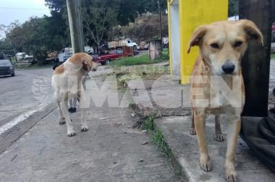 Maltrato animal FGE Poza Rica