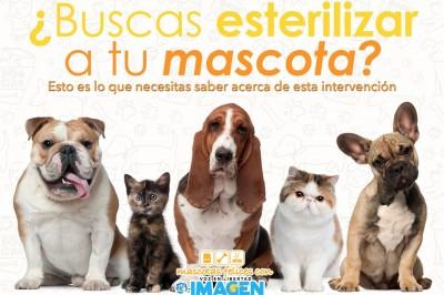 10 razones por las que la esterilización es benefica para tu mascota