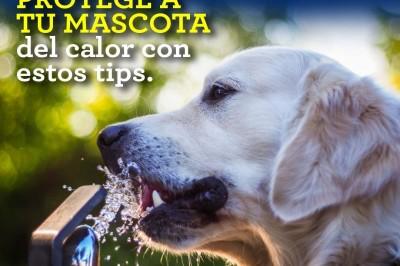 Tips para cuidar a tu mascota de las altas temperaturas