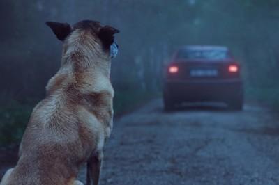 En México 7 de cada 10 perros son abandonados: Casitas en movimiento