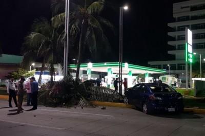 Dos hombres en estado de ebriedad chocan contra dos palmeras