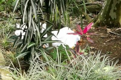 Muere mujer al arrojarse del último piso de Torre Ánimas, en Xalapa