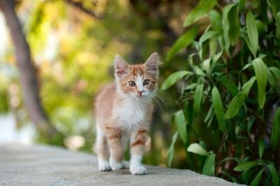 ¿Por qué se celebra hoy el Día Internacional del Gato?