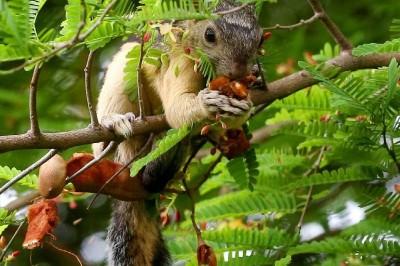 Conabio lanza reto de fotografía para acercar y conocer la vida silvestre