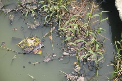 Playas de la entidad no son aptas para bañistas: Chalchi