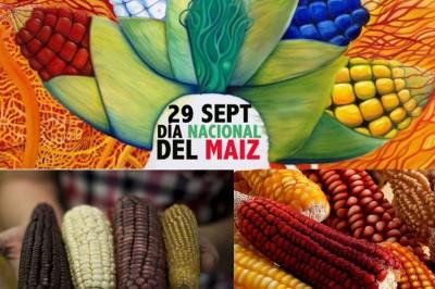 Declaran el 29 de septiembre como Día Nacional del Maíz