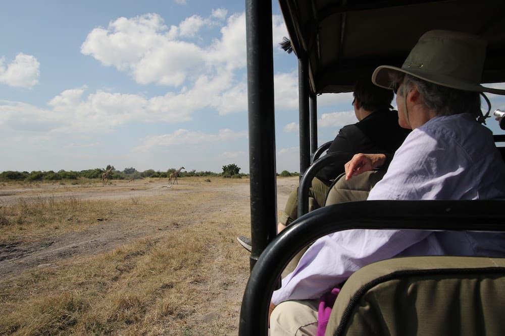 Botswana-Giraffes