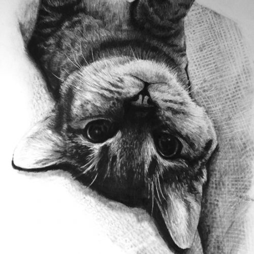 Drawing Realistic Animals Preview with Gaella Materne