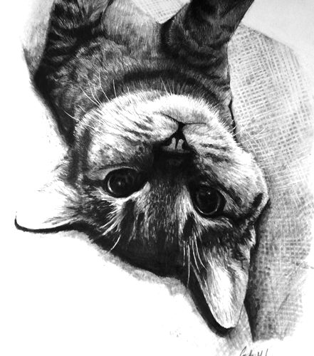 Jan 26 – Drawing Realistic Animals