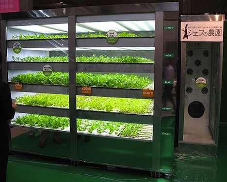 Post-Apocalyptic Vegetable Farms