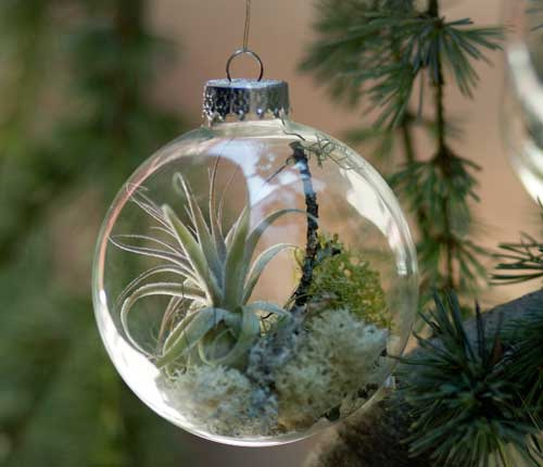 Living Plants Christmas Decorations