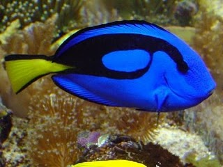 Most Amazing Aquarium Fishes