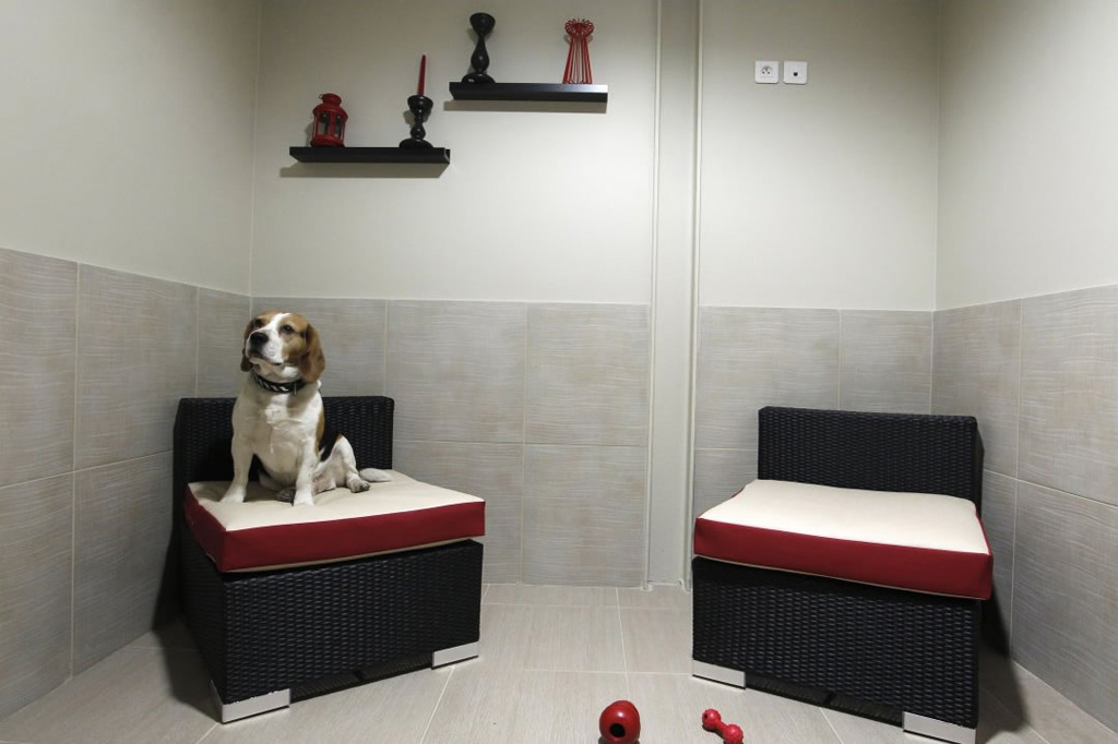 Luxury Hotel for Pets Actuel Dogs in Paris (5)