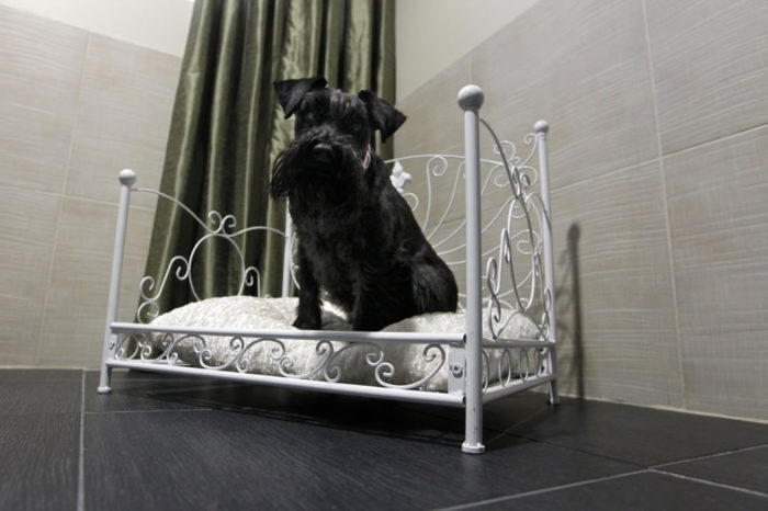 Luxury Hotel for Pets Actuel Dogs in Paris (4)