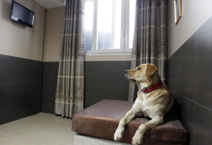 Luxury Hotel for Pets Actuel Dogs in Paris (1)