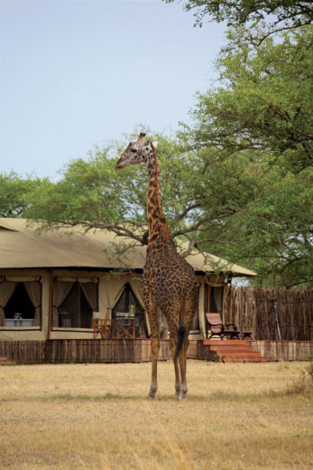 Singita Grumeti Reserves – Worlds Best Hotel (9)