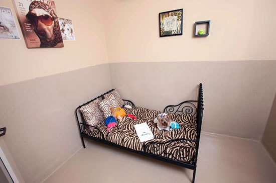 The Barkley Luxury Accommodation for Your Pet (7)
