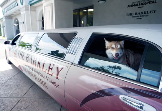 The Barkley Luxury Accommodation for Your Pet (2)