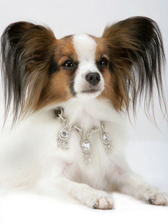 World's Most Expensive Dog Collar: A Whopping $3.2 Million