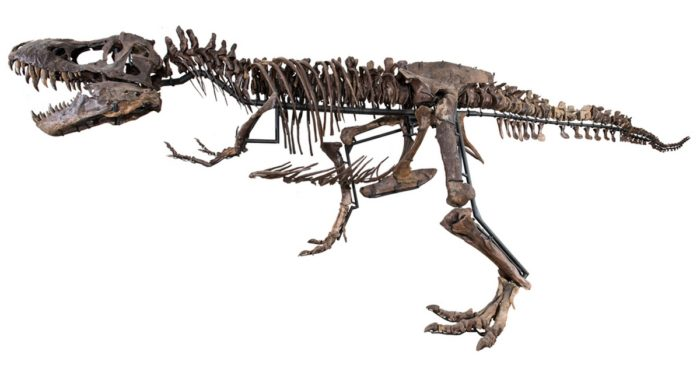 Your Own T-Rex Skeleton For A Few Million Dollars 1