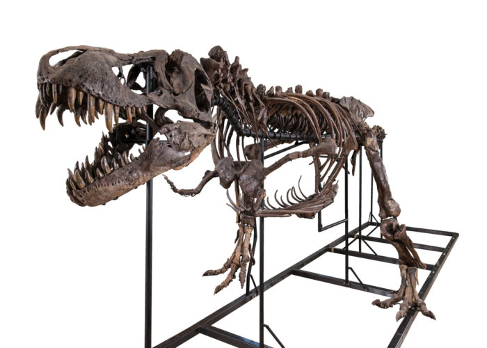 Your Own T-Rex Skeleton For A Few Million Dollars 3