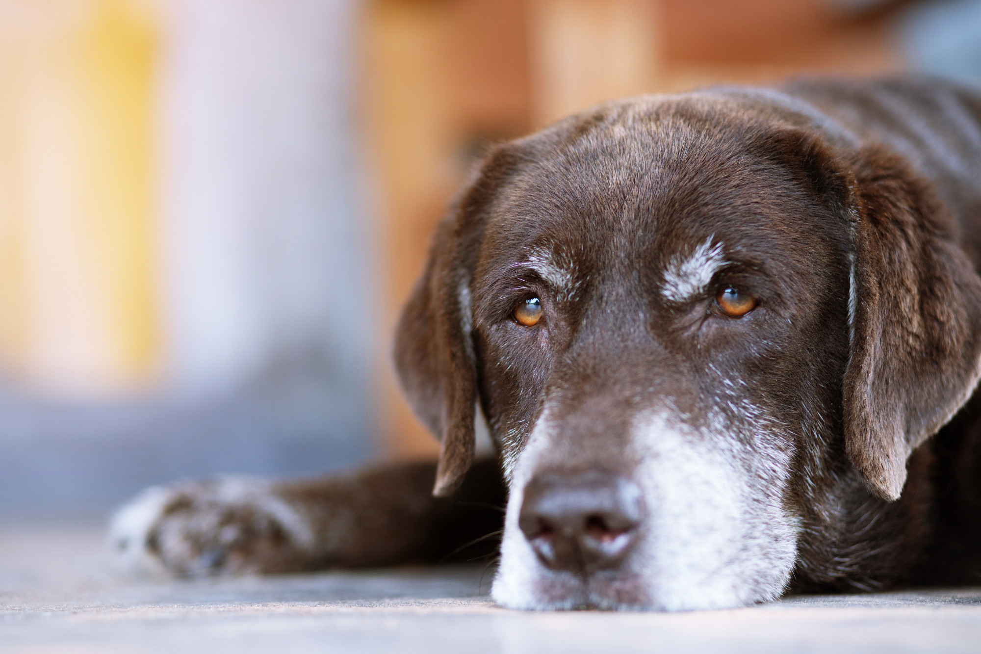 6 Signs That Your Dog is Getting Old