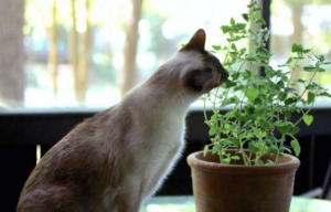 Cat getting into a plant